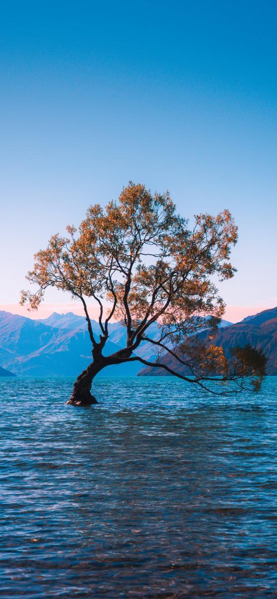 景色 树木 水 湖面 群山