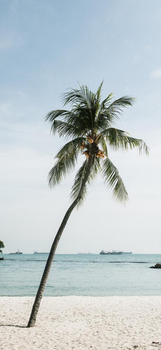 椰树 造型 沙滩 海边