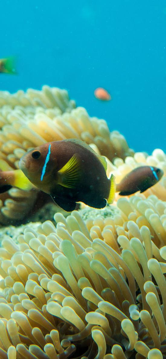 深海 海洋生物 海鱼 珊瑚