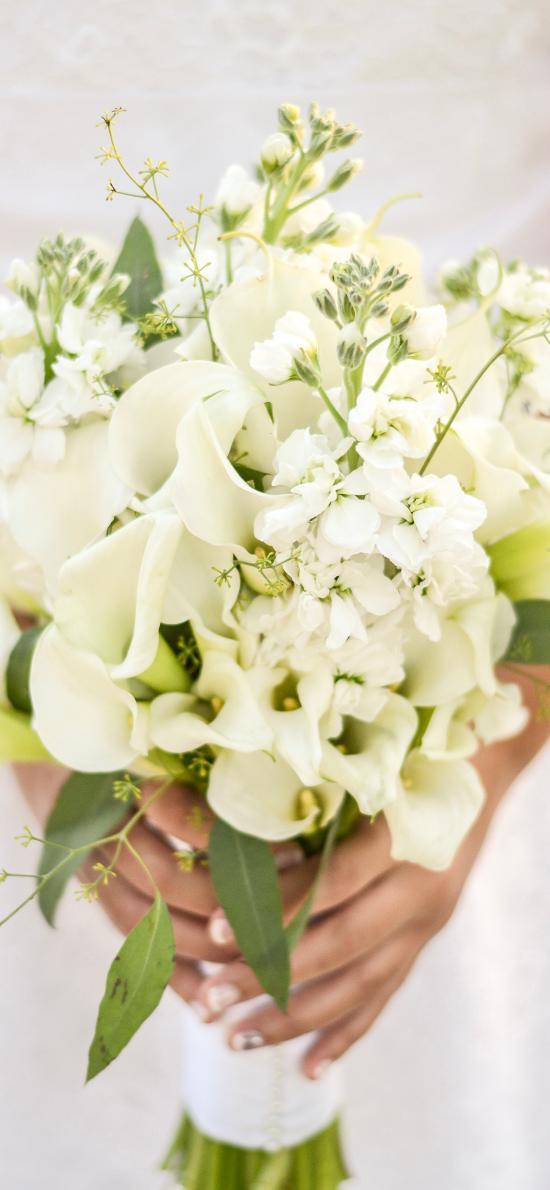 鲜花 花束 马蹄莲 洁白 清新