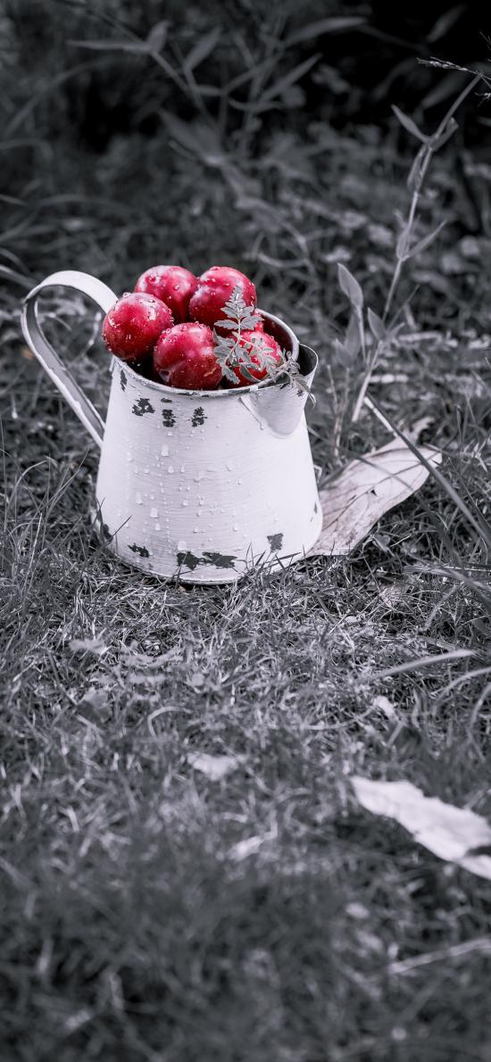 李子 水果 新鲜 草丛