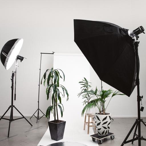 盆栽 绿化 摄影 特写