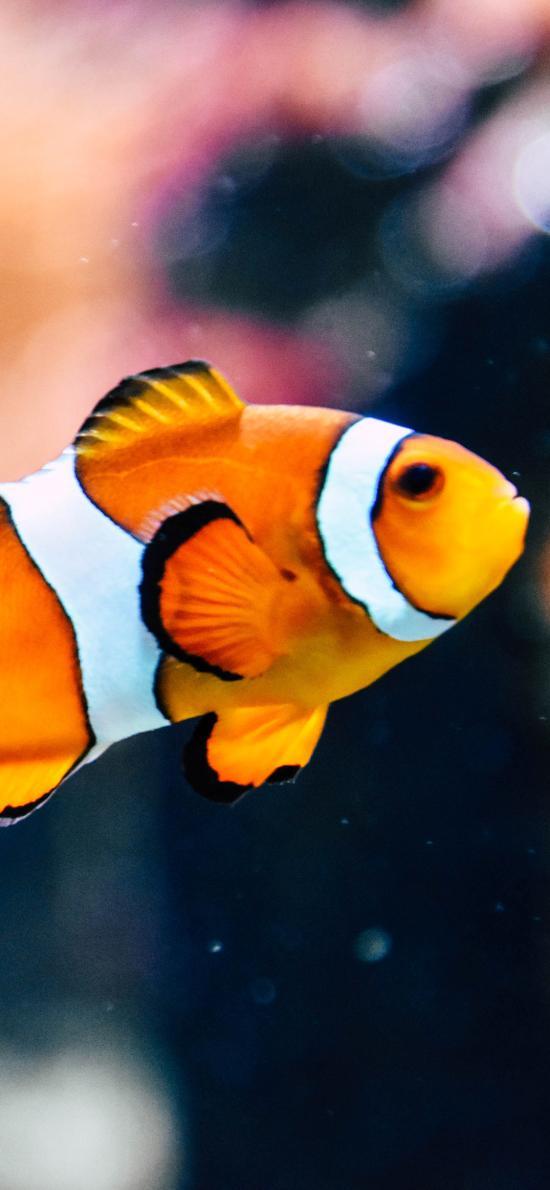 小丑鱼 鱼类 深海