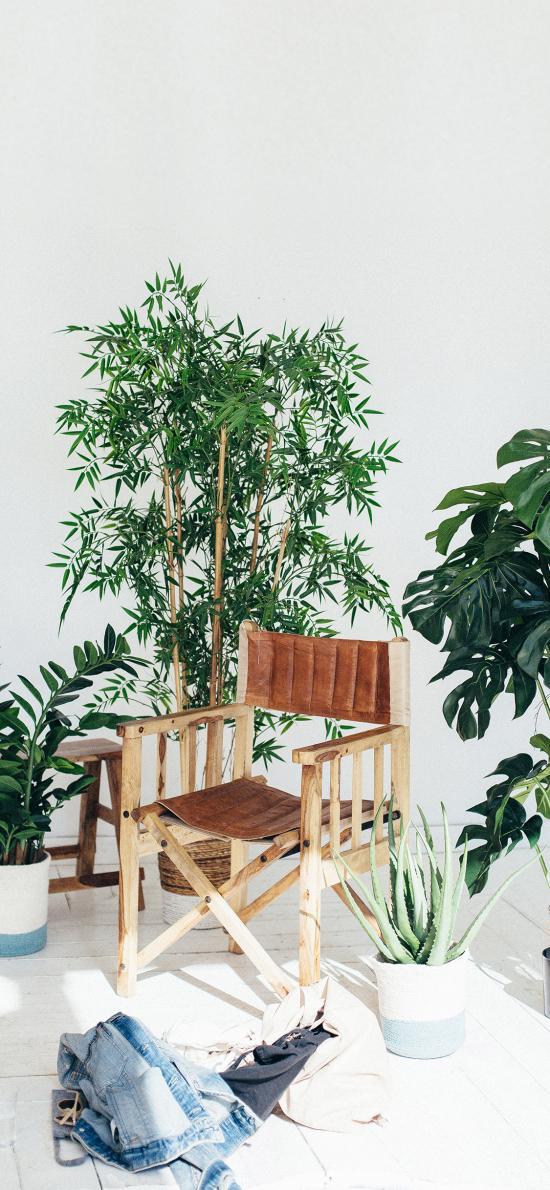 清新 家居 盆栽 绿植 衣物