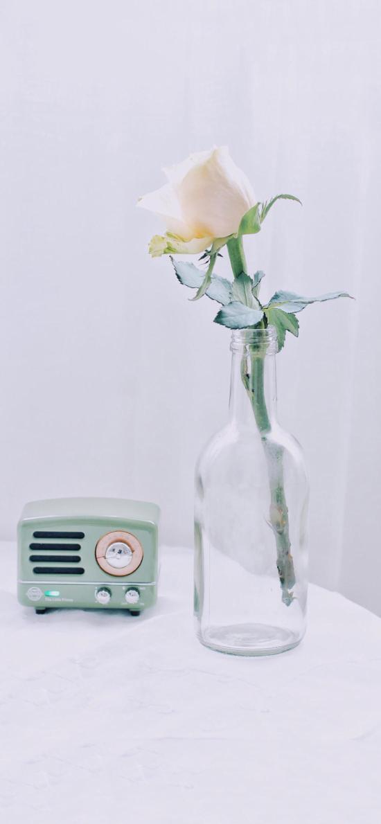 花瓶 玻璃 插花 白玫瑰