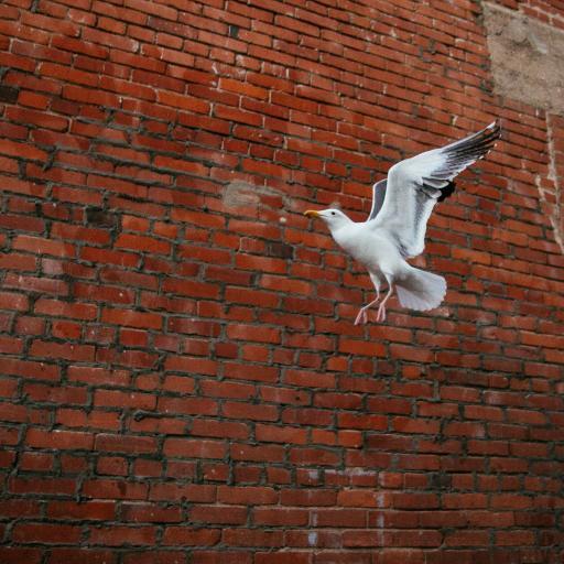 鸟类 飞鸟 飞翔 砖墙