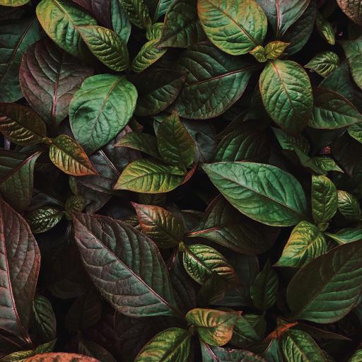 绿植 枝叶 生长 密集 墨绿