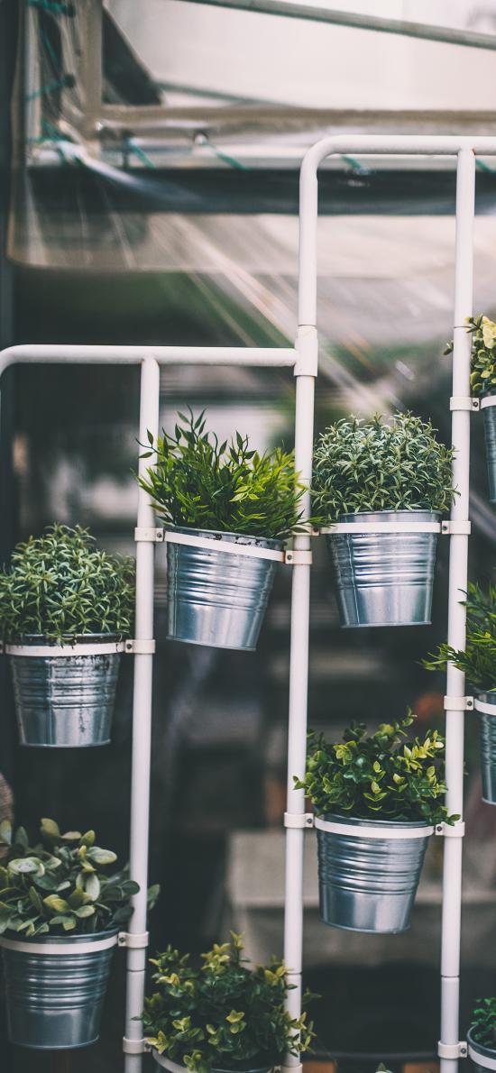 铁桶 盆栽 装饰 精致 绿植