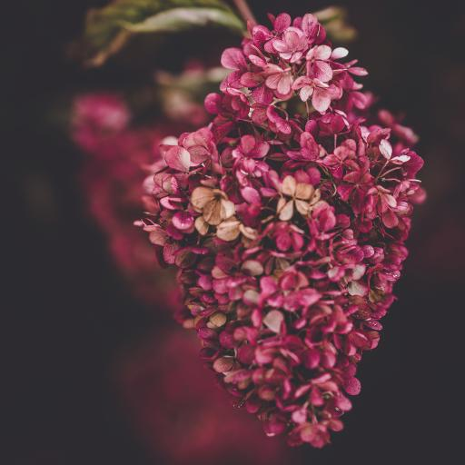 鮮花 花簇 密集 小花