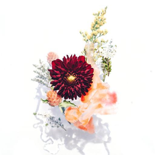 鲜花 礼花  菊花
