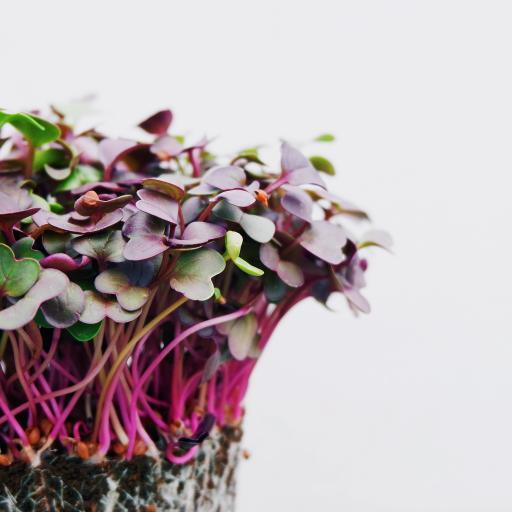 枝芽 发芽 生长 密集