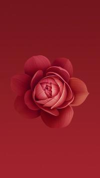 花 红色 盛开