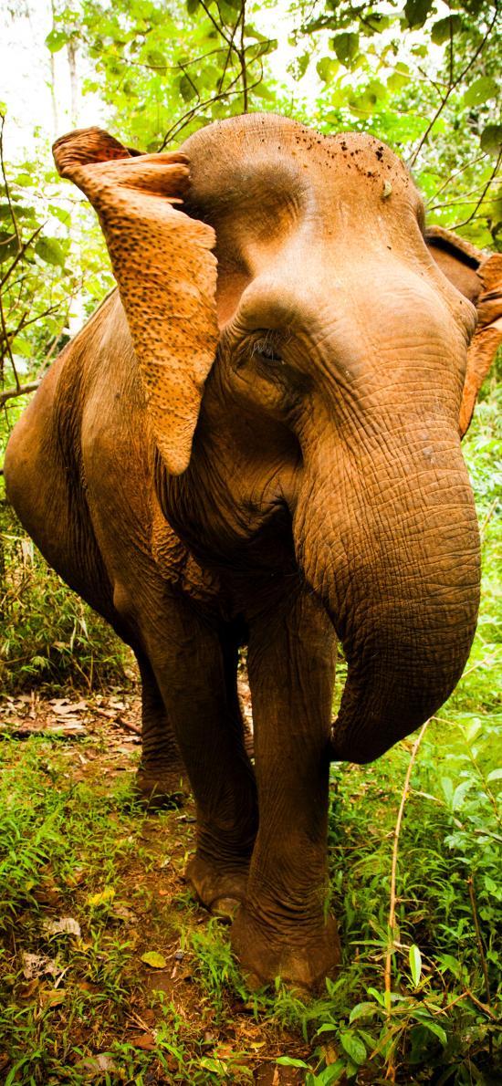 大象 野外 丛林 庞大 体型