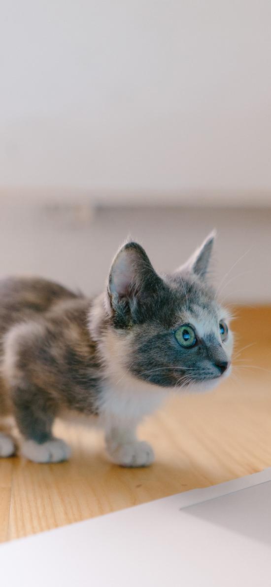 猫咪 宠物 幼仔 警惕