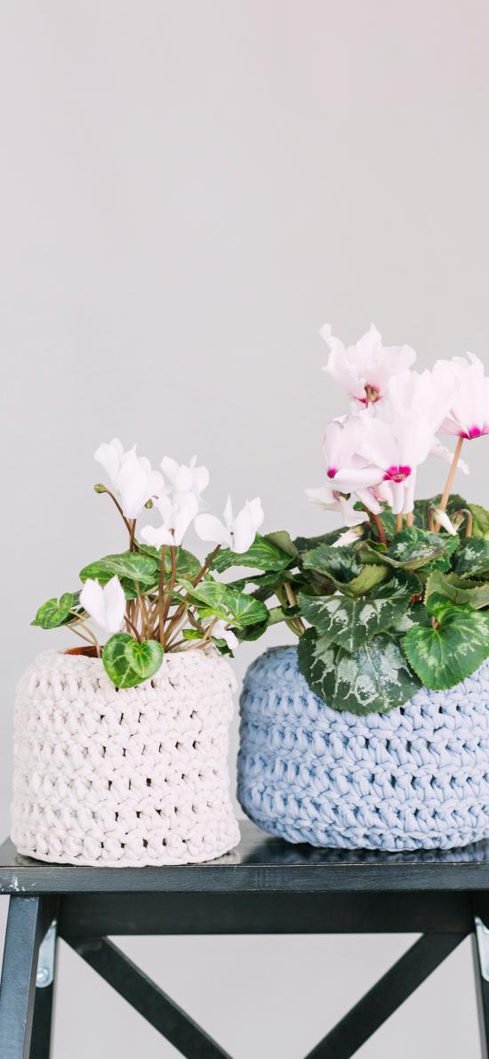 盆栽 花瓶 绿植 鲜花