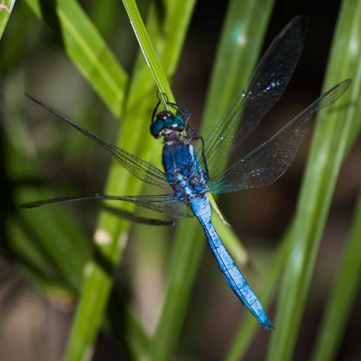 昆虫 蜻蜓 绿叶 翅膀