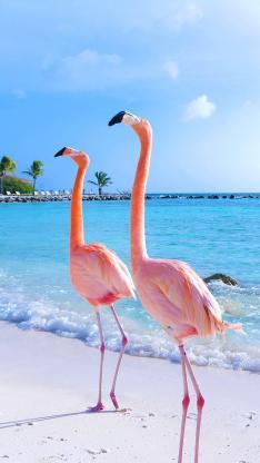火烈鸟 粉色 海边 海浪 翅膀