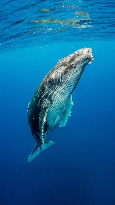 鲸 海洋生物 蓝色 海水