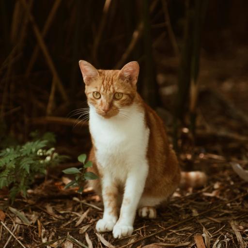 猫咪 橘猫 宠物 落叶