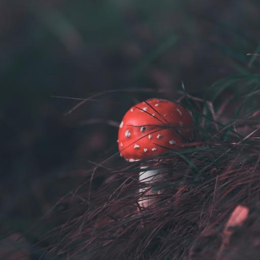 菌類 蘑菇 雜草 陰暗