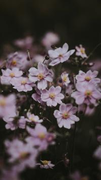 鲜花 紫色 小花 清新 绽放