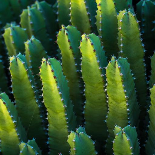 仙人掌 绿植 密集