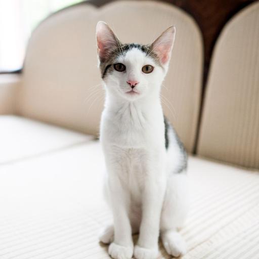 猫咪  宠物 洁净 乖巧