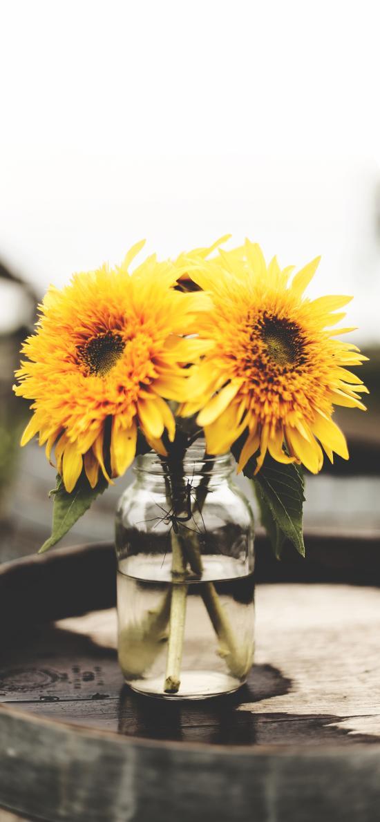 花瓶 插花 菊花 黄色