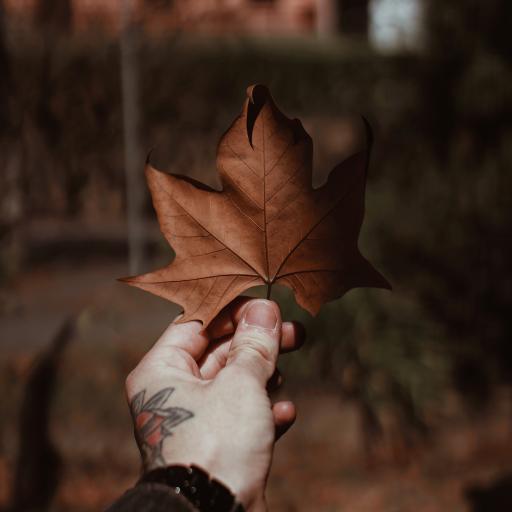 落叶 枫叶 枯叶 纹身