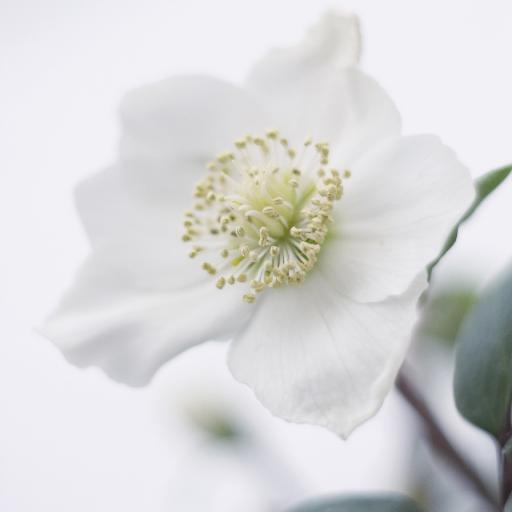 鲜花 盛开 花蕊 白