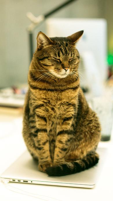 猫咪 皮毛 宠物 站立