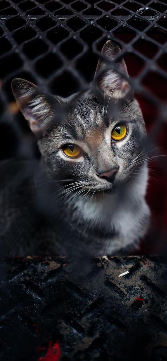 猫咪 宠物 铁网 灵气