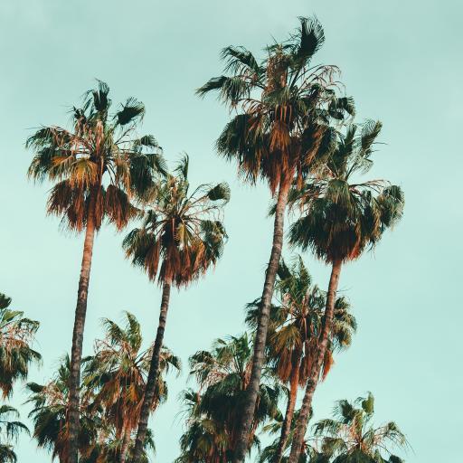 棕榈 椰树 树木 枝干
