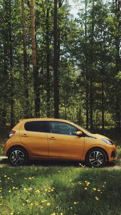 汽车 树林 草地 户外 轿车