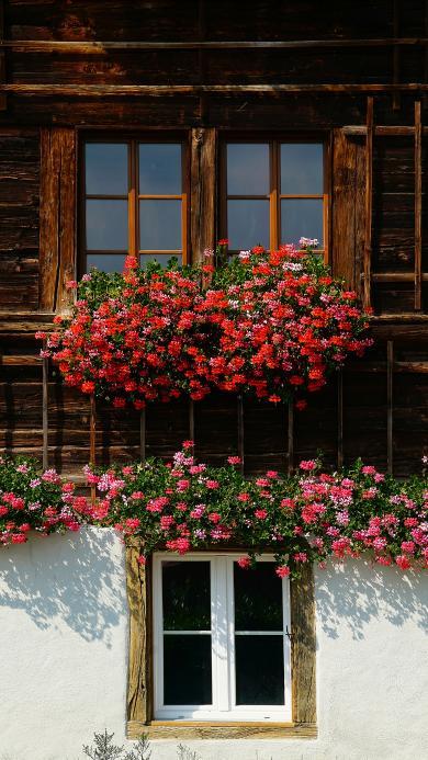 景色 房屋 花丛 鲜花 盛开