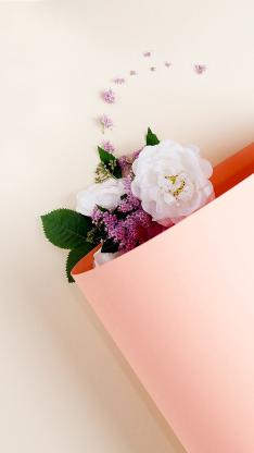卡纸 鲜花 白色 绽放