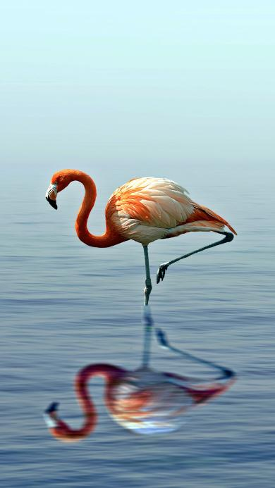 火烈鸟 倒影 唯美 翅膀 湖水