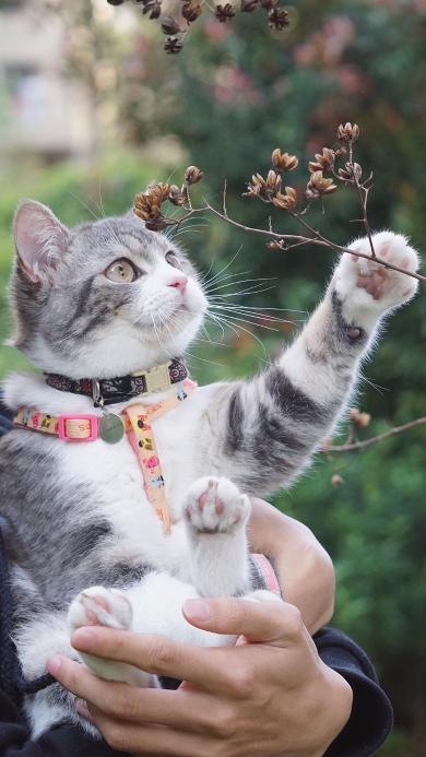 猫咪 宠物 喵星人 可爱 萌