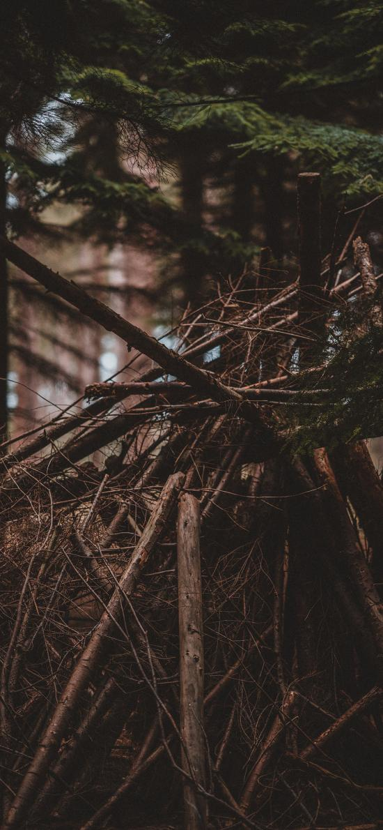 树林 木柴 堆积 砍伐