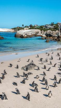 企鹅 海滩 沙滩 海岸 可爱