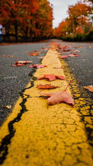 道路 公路 单黄线 落叶 枫叶