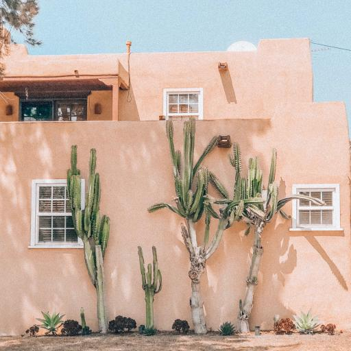 建筑 房屋 仙人掌树