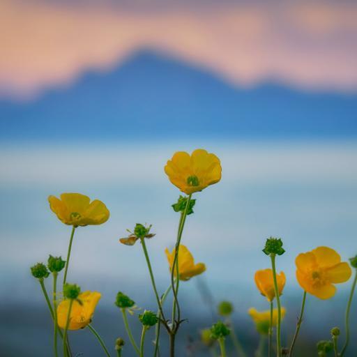 鲜花 黄色 小清新 绽放