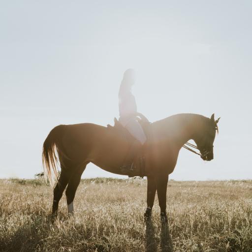 郊外 骑马 棕马 女孩 自然美景
