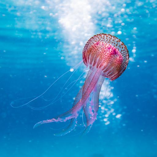 水母 海洋生物 游动 透明 蓝色