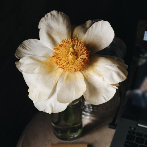 盛开 花蕊 鲜花 花瓣