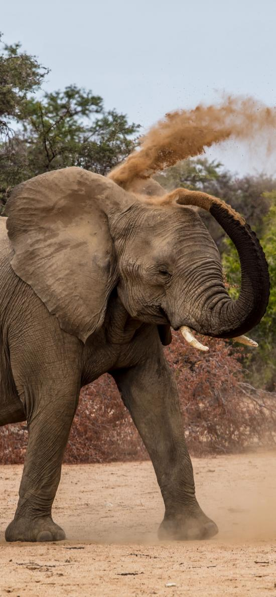 郊外 大象 长鼻子 玩耍 沙子