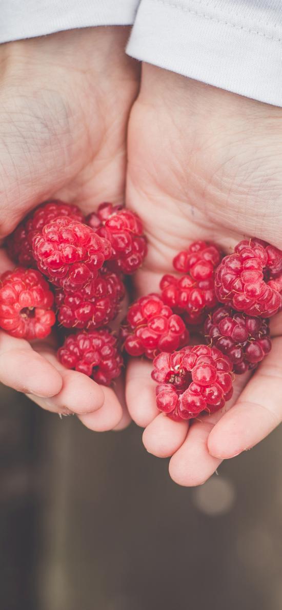 覆盆子 树莓 野莓 果子 双手