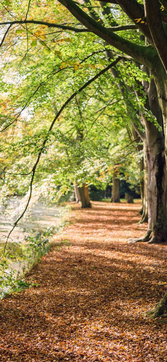 树林 绿叶 树干 公园 绿化