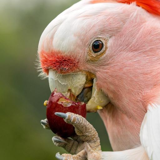 鸟类 飞禽 鹦鹉 觅食 爪子